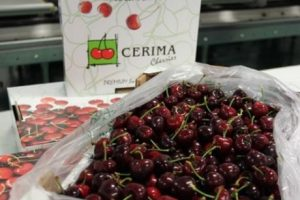 cerima_cherries