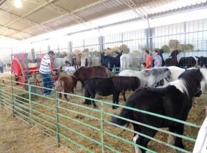 pavelló ramader fira mln